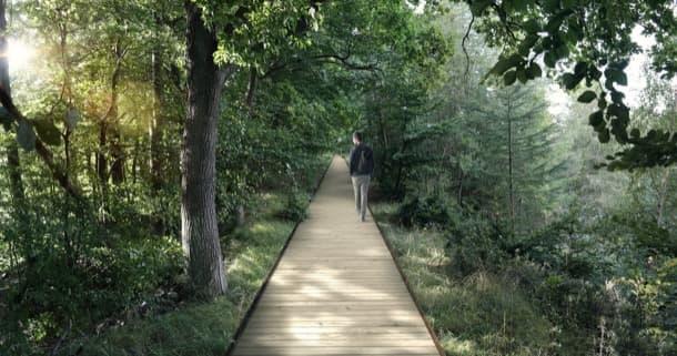 camino de madera hasta la torre Teetop Experience